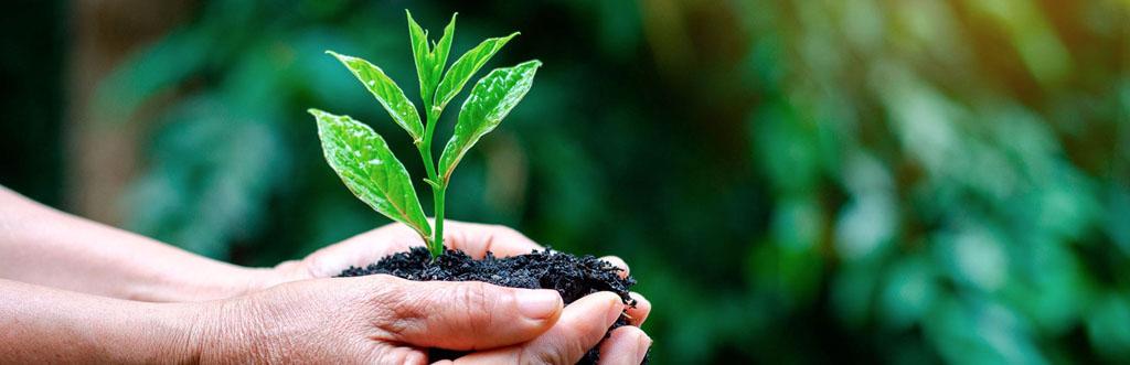 Cultura Socio-Ambiental - Meirinho Biológico
